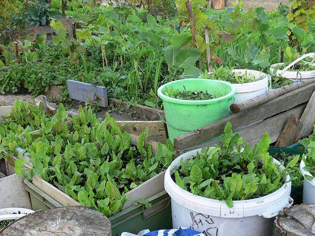 Trucos de cultivo urbano para tener tu huerta en casa - Pequeno huerto en casa ...