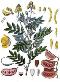 planta de sen