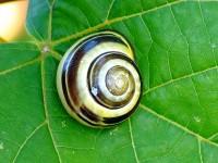 640px-Snail_0075